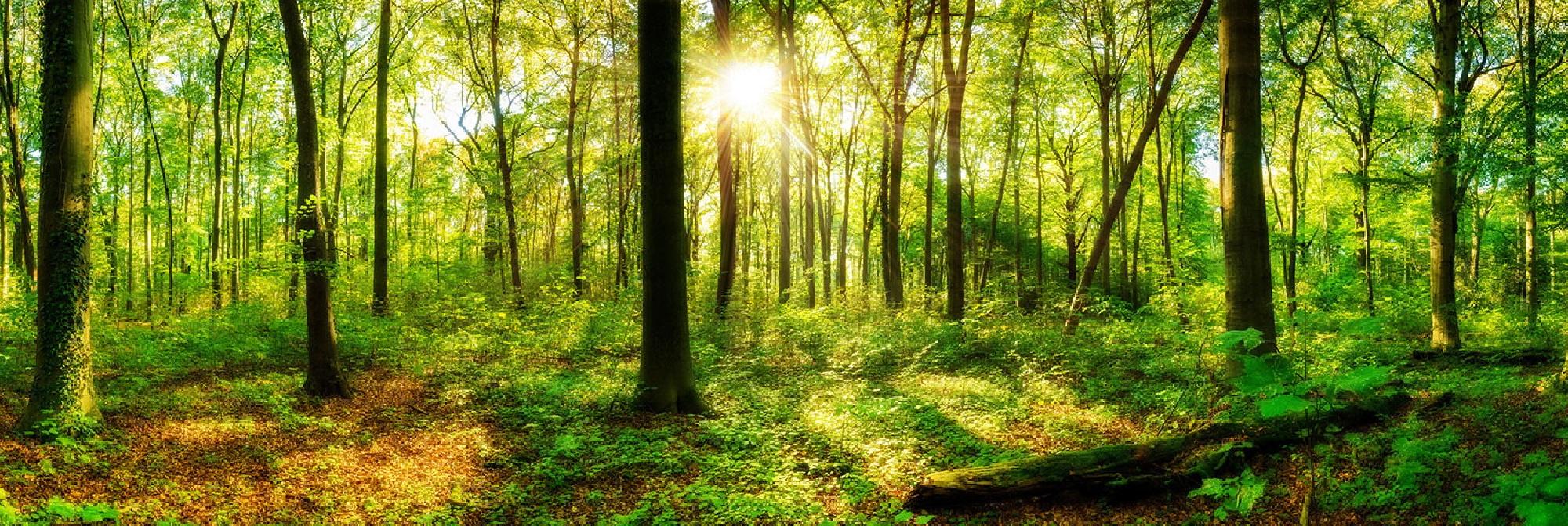 Bestattungsarten Friedwaldbestattung, Baumbestattung